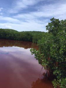 Red Mangos at Las Cabesas Nature Preserve Fajardo Puerto Rico