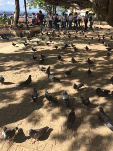 Take a fun walk through the pigeons in Pigeon Park.