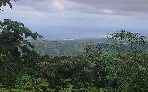 6 Must-See Stops When Visiting El Yunque Rainforest