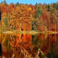 Postcard from Putnam and Dutchess Counties, Autumn Day-Trips
